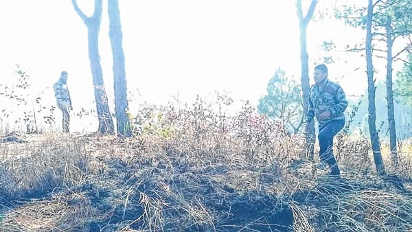 Forest Fire_1