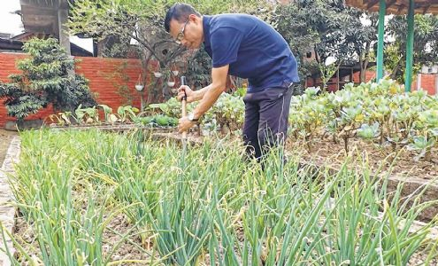 Kitchen gardening grabs attention of the health conscious