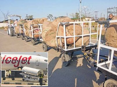 Huge consignment of betel leaves seized at airport