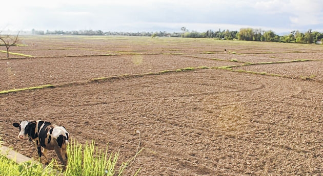 Fields lie barren in face